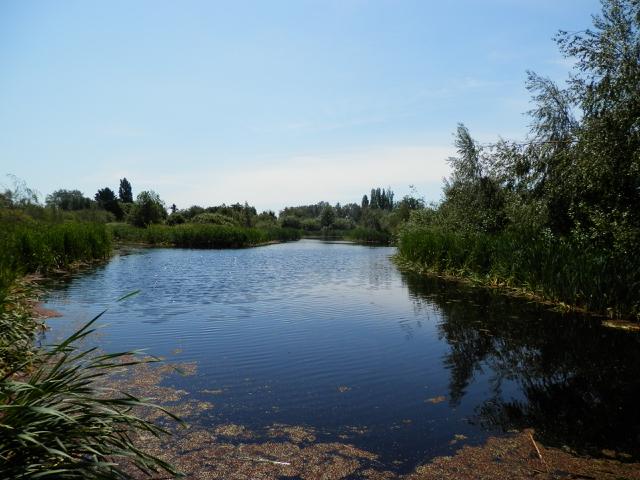 The marsh.